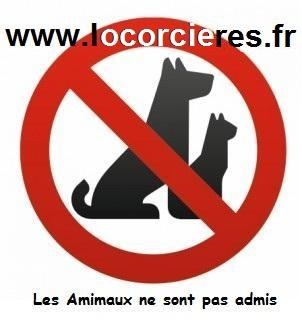 Appartement sans animaux